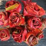 Cum sa faci trandafiri din frunze uscate in doar cateva miscari